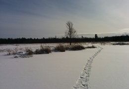 A trail across the beaver pond