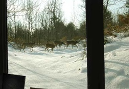 A family of deer traverses the snow